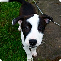 Adopt A Pet :: Gracie - Morgantown, WV