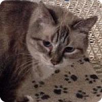 Adopt A Pet :: Will Feral - Odessa, TX