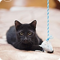 Adopt A Pet :: Wicky - Houston, TX