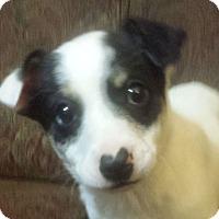Adopt A Pet :: Lillie AD 08-06-16 - Preston, CT