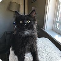 Adopt A Pet :: Opal - San Jose, CA