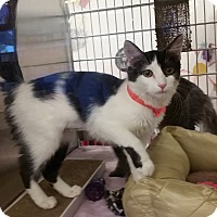 Adopt A Pet :: Elsa (in CT) - Manchester, CT