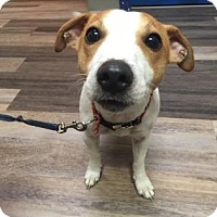 Adopt A Pet :: Rosco - Adrian, MI