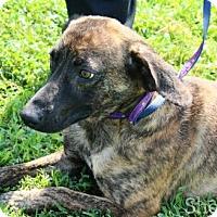 Adopt A Pet :: Slyder - Goodlettsville, TN