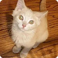 Adopt A Pet :: Rhianna - Danbury, CT