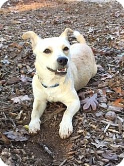 Terrier (Unknown Type, Small) Mix Dog for adoption in Monroe, North Carolina - Bailey