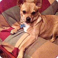 Adopt A Pet :: Sonny - Mount Ida, AR