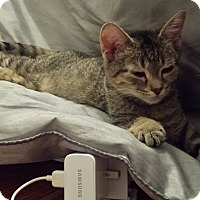Adopt A Pet :: Ziggy - Toronto, ON