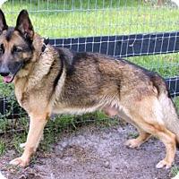 Adopt A Pet :: Cosmo 751 - Loxahatchee, FL