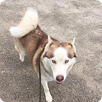 Adopt A Pet :: Denali - Zanesville, OH