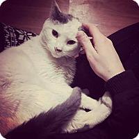 Adopt A Pet :: Wyatt - Bensalem, PA