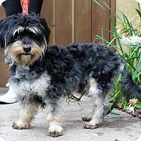 Adopt A Pet :: Figgins - Los Angeles, CA
