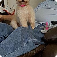 Adopt A Pet :: Pixi - Pompton Lakes, NJ