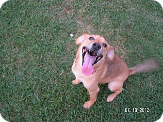 Ella | Adopted Dog | Richmond, VA | Dachshund/German ...
