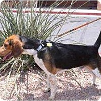 Adopt A Pet :: Zipcode - Phoenix, AZ