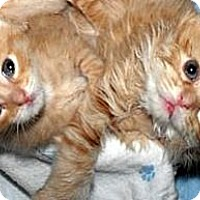 Adopt A Pet :: Gracie & Muffin - Xenia, OH