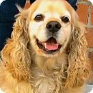 Adopt A Pet :: BERNIE (video)