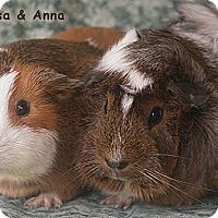 Adopt A Pet :: Elsa & Anna - Santa Barbara, CA