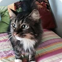Adopt A Pet :: Aalijah - Harrisburg, NC