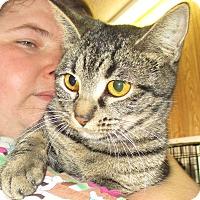 Adopt A Pet :: Tweetie - Reeds Spring, MO