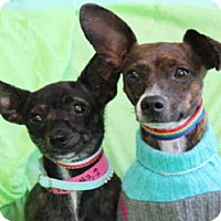 Adopt A Pet :: PEANUT - Lawrence, KS