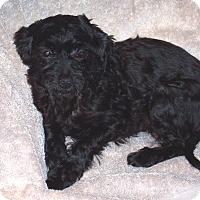 Adopt A Pet :: Haiti - CONOVER, NC
