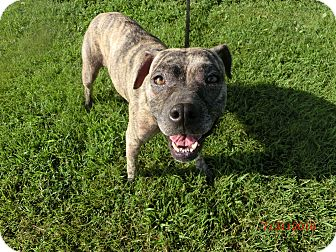 Pit Bull Terrier Mix Dog for adoption in MC KENZIE, Tennessee - Isabella