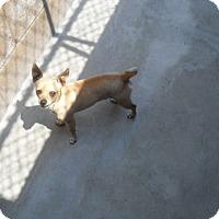 Adopt A Pet :: Peanut - Ripon, CA