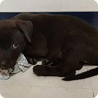 Adopt A Pet :: Wyatt - Hollywood, MD