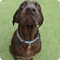 Labrador Retriever Dog for adoption in Towson, Maryland - Molly #5