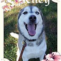 Adopt A Pet :: Riley - Stuart, VA