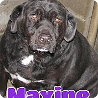 Adopt A Pet :: #243 Maxine - Lawrenceburg, KY