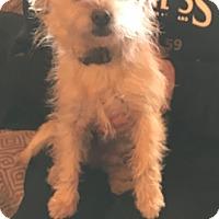 Adopt A Pet :: Gwen - Lodi, CA