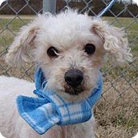 Adopt A Pet :: Marshmallow - Oswego, IL