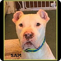 Adopt A Pet :: Sam - Memphis, TN