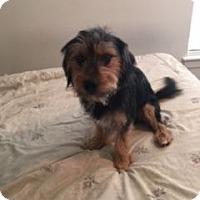 Adopt A Pet :: Tobie - Richmond, VA