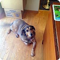 Adopt A Pet :: Jasmine - Gig Harbor, WA