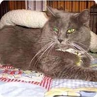 Adopt A Pet :: Thelma Lou - Easley, SC
