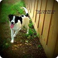 Adopt A Pet :: Yogi - Gadsden, AL