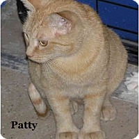 Adopt A Pet :: Patty - Catasauqua, PA