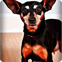 Adopt A Pet :: Daisy - Owensboro, KY