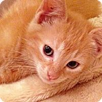 Adopt A Pet :: Sunbeam - N. Billerica, MA