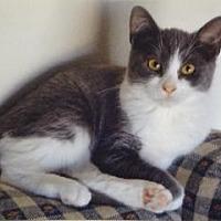 Adopt A Pet :: Mikki - San Jose, CA