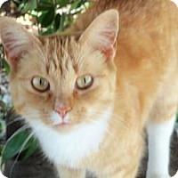 Adopt A Pet :: Sassy - Salisbury, NC