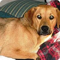 Adopt A Pet :: Po Bear - Huntsville, AL