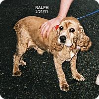 Adopt A Pet :: Ralph - Tacoma, WA
