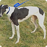 Adopt A Pet :: Remmy - Florence, KY