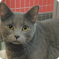 Adopt A Pet :: Shadow - Winchendon, MA