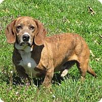 Adopt A Pet :: Elmer - Oakland, AR