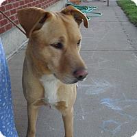 Adopt A Pet :: Sunny Boy - Chewelah, WA